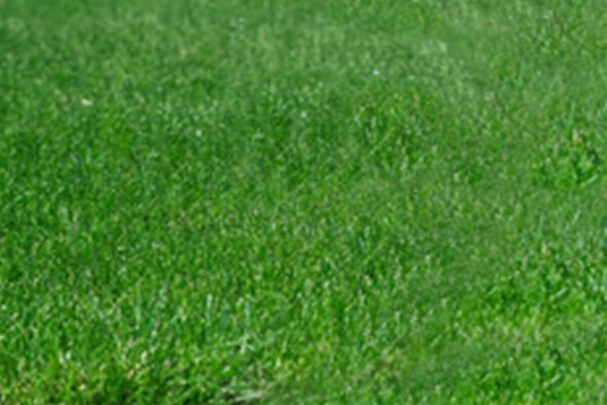 fertilisation apres les gazons durables belanger